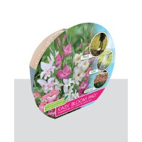 Easy Bloom Pad - Gladiolen Nanus Sorbet Mix  | 8 Bollen