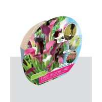 Easy Bloom Pad - Zantedeschia Cool Bunch | 3 Bollen
